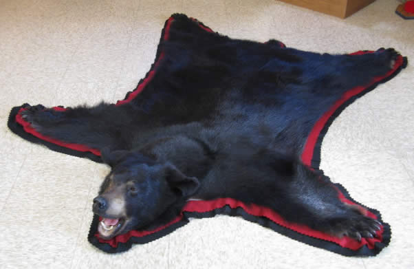 5 Black Bear Rug Mount Regular 1200 00 Special Price 999