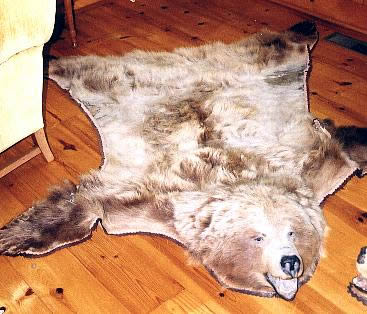 macu0027s taxidermy mooseheads for sale taxidermy for sale taxidermy mounts for sale today - Bear Rugs