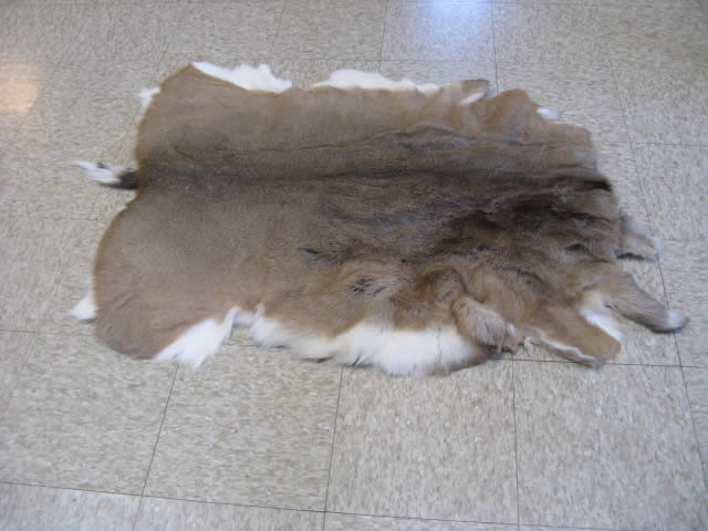 Hair On Elk Hide For Sale 76